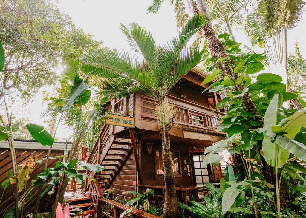 High ground room Tree Frog Roatan Tranquilseas
